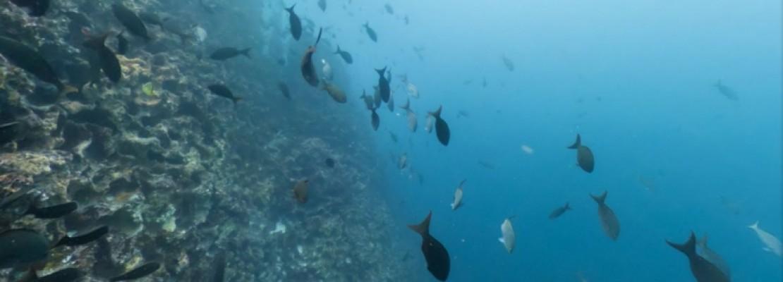 Η Google κάνει «βουτιά» στον ωκεανό -Ταξίδι σε τροπικά νησιά (PHOTOS)
