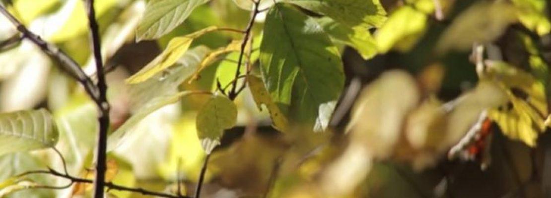 Βιονικό σπανάκι ανιχνεύει εκρηκτικά -VIDEO