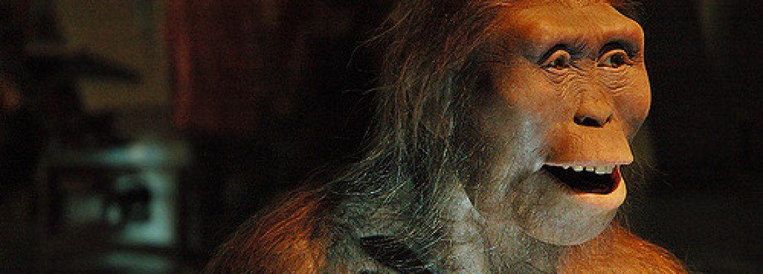 Η «Λούσι» περνούσε πολύ χρόνο στα δέντρα –Πέθανε όταν έπεσε κάτω