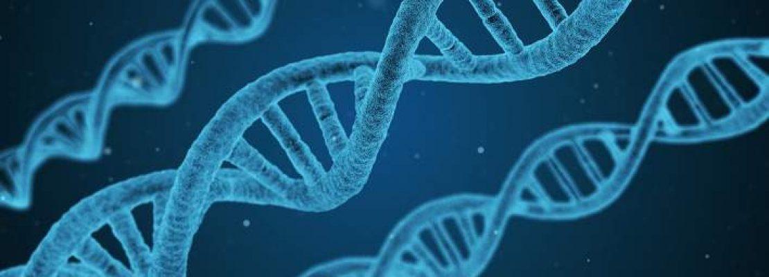Είμαστε… εξελιγμένα πιθηκοειδή: Πώς ένα απλό πείραμα απέδειξε την θεωρία του Δαρβίνου