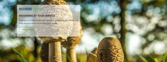 Ελληνική εφαρμογή εντοπίζει άγρια μανιτάρια -Εως και 8 μέρες πριν φυτρώσουν