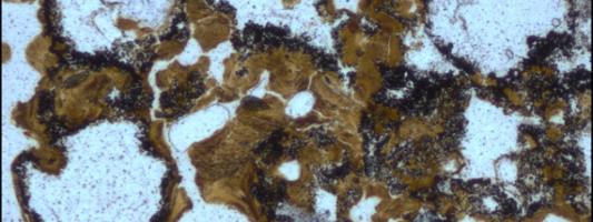 Ανακαλύφθηκαν οι αρχαιότερες ενδείξεις μικροβιακής ζωής στην ξηρά ηλικίας 3,48 δισ. ετών
