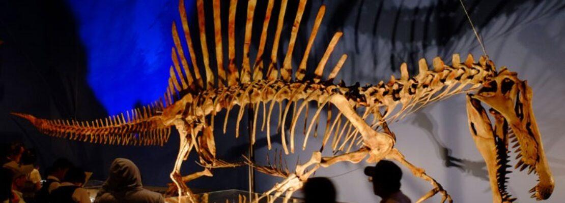 Ανακαλύφθηκε ότι ο Σπινόσαυρος ήταν ο πρώτος που κολυμπούσε σε ποτάμια της βόρειας Αφρικής