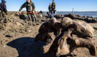 Τα λείψανα ενός μαλλιαρού μαμούθ ηλικίας 10.000 ετών εντοπίστηκαν σε λίμνη στη Σιβηρία