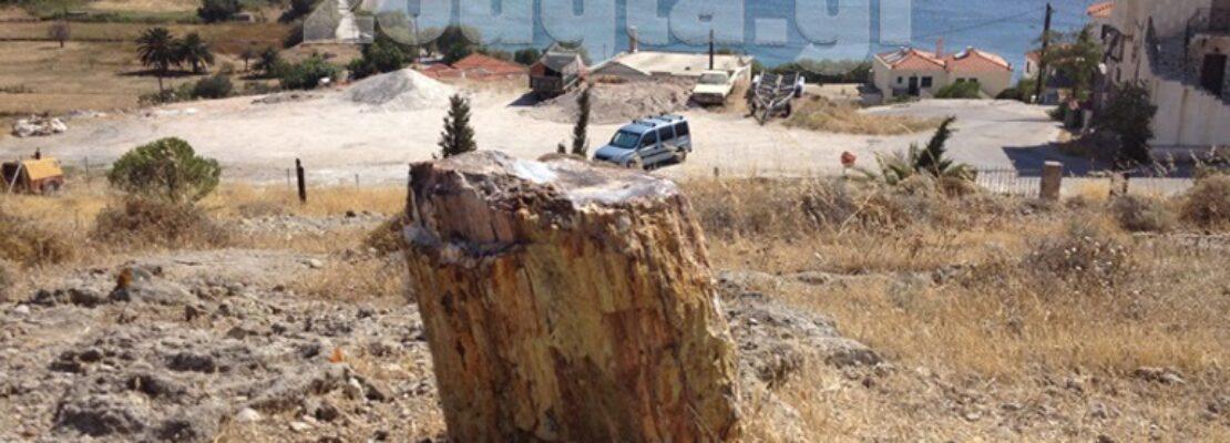 Περιήγηση και επιστημονική ενημέρωση στο Απολιθωμένο Δάσος της Μυτιλήνης