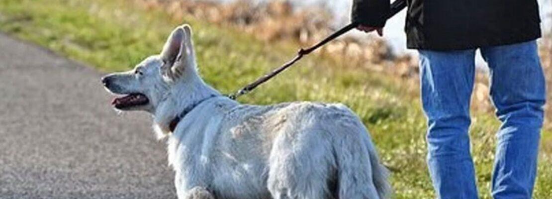 Έρευνα: Η βόλτα του σκύλου και το delivery αυξάνουν τον κίνδυνο μόλυνσης εν μέσω lockdown