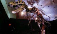 Στα 2,5 δισεκατομμύρια εκτιμάται ο αριθμός των Τυραννόσαυρων που έζησαν στη Γη