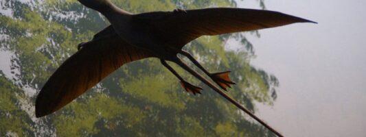 Χιλή: Τα απολιθωμένα λείψανα ενός πτερόσαυρου ανακαλύφθηκαν στην έρημο Ατακάμα